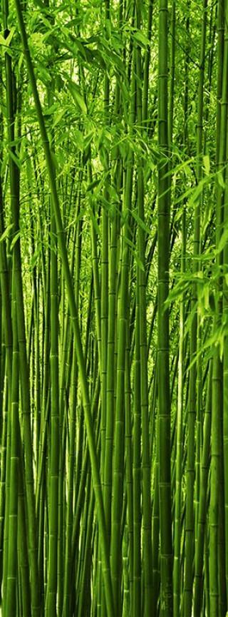 Фотообои ''Бамбук 100х270 см''