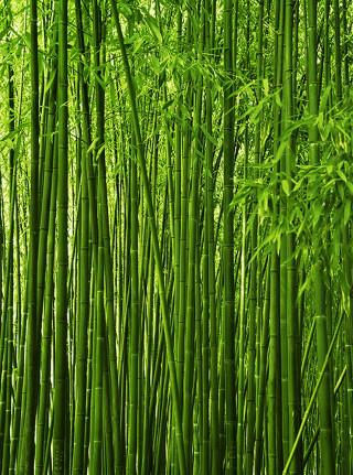 Фотообои ''Бамбук 200х270 см''