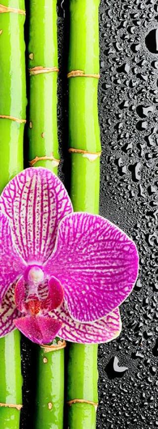 Фотообои ''Бамбук и орхидея 100х270 см''