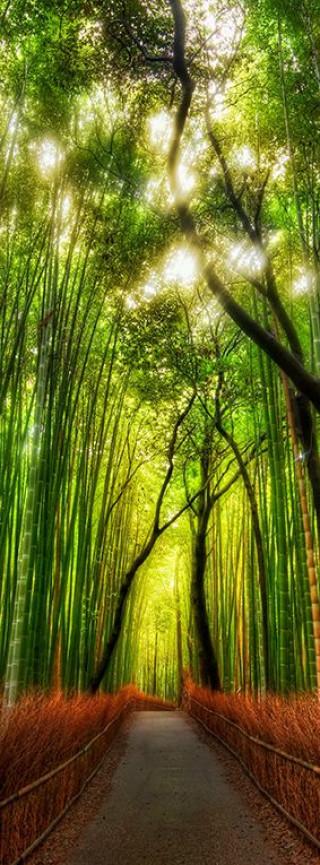 Фотообои ''Бамбуковая роща 100х270 см''