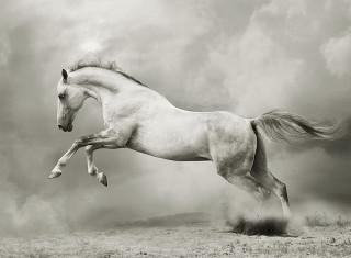 Фотообои ''Белый конь 200х147 см''