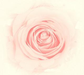 Фотообои ''Бутон розы 300х270 см''