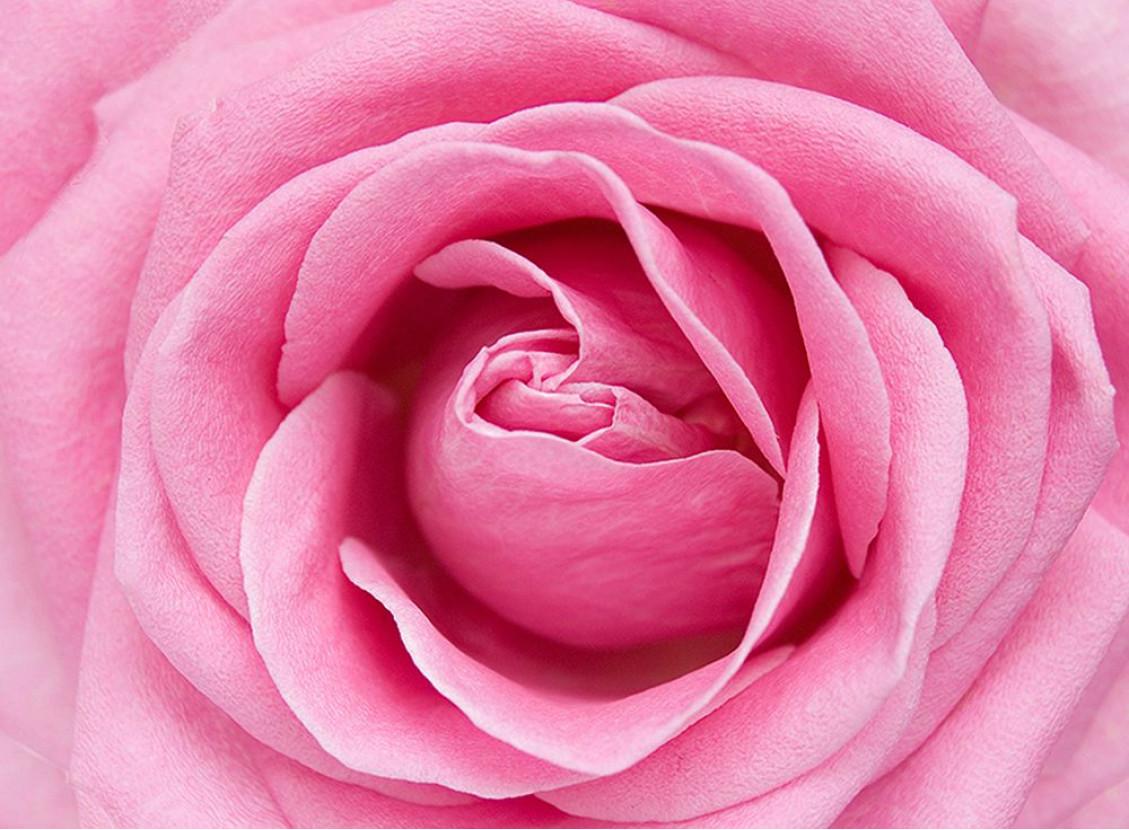 Розовый цвет в картинках