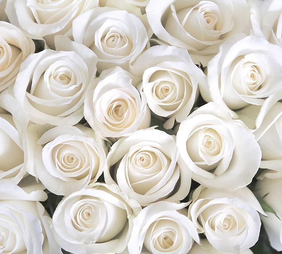 основных фотопанно розы фото немало